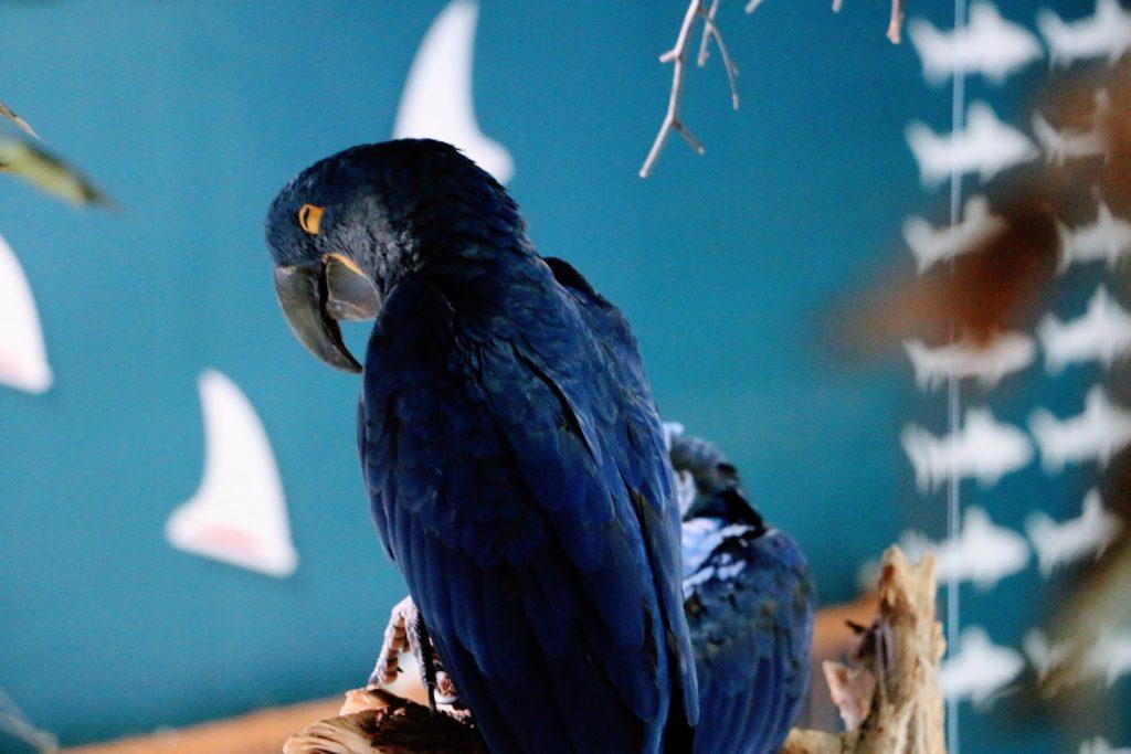 Aves no aquário de dubai