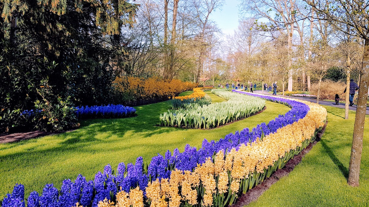 Jardim-de-Tulipas-Keukenhof-Holanda