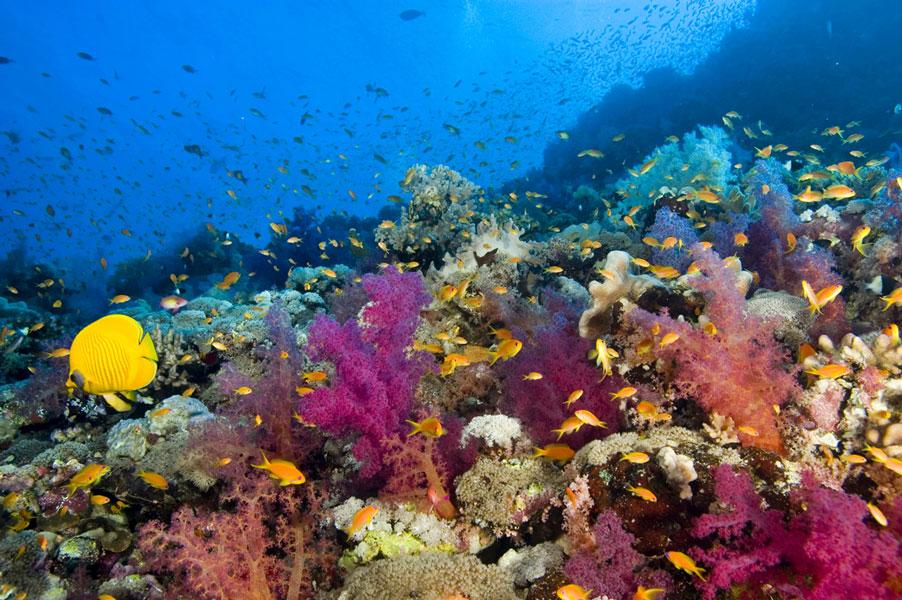 Under The Sea theme Backdrop