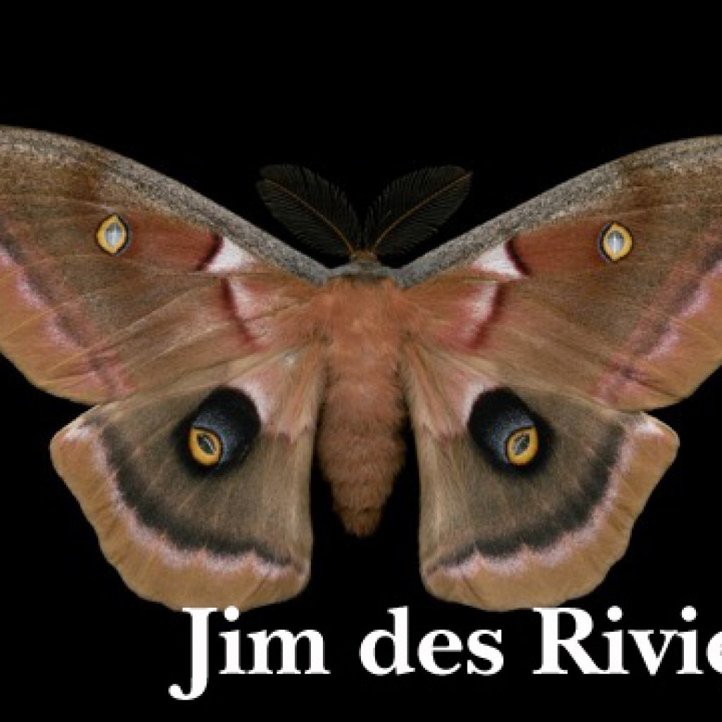 Moth by Jim des Rivieres