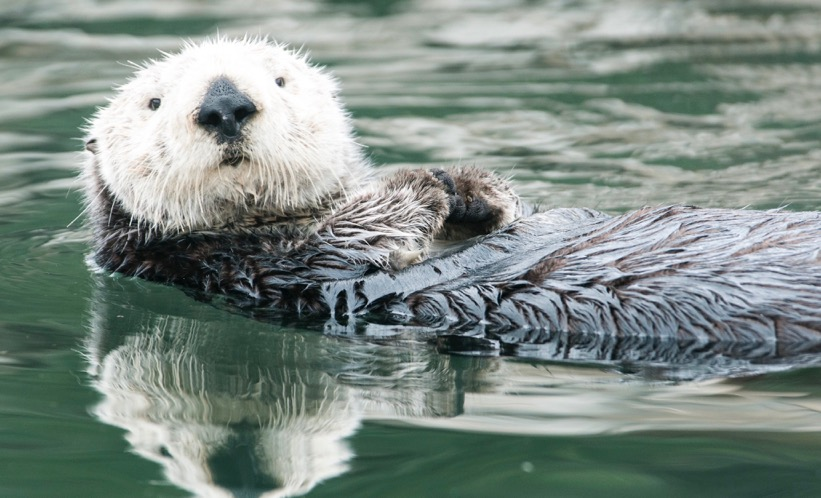 ART REVIEW of Sea Otter and Family photo by Fine Art photographer Greg Tucker