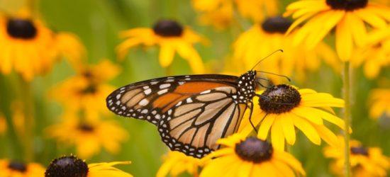 Butterfly near Green Bay Wisconsin by Greg Tucker