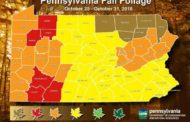 Despite Weather, DCNR Projects Upcoming Week As 'Peak Foliage'