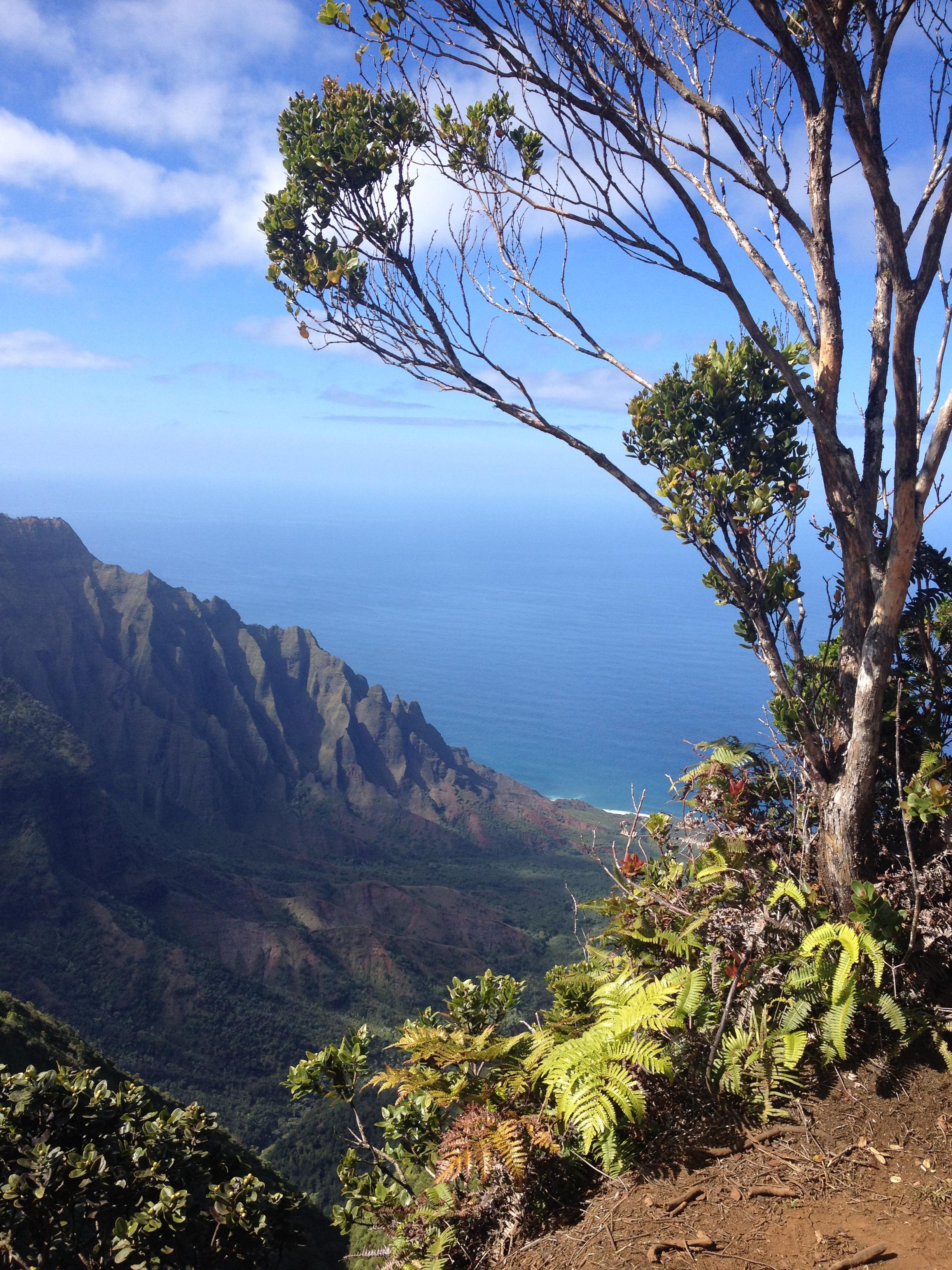 Kauai/Hawaii is always a good idea…