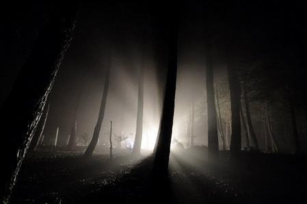 dark trees in light