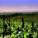 Chianti wijnroutes rondom Firenze en Siena