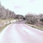 Fietstocht Figline Valdarno – Reggello – Figline (50-60 km)