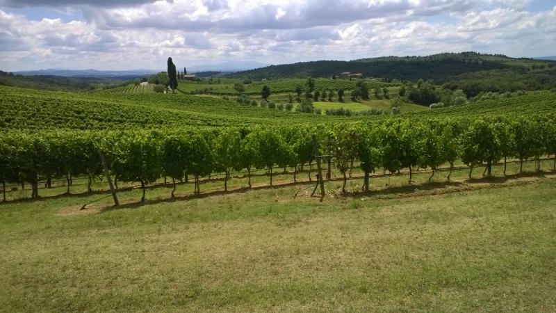 wijnveld in de Chianti Classico streek