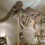 Het dino museum in Firenze