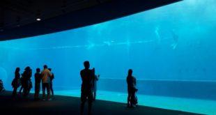 Genua aquarium