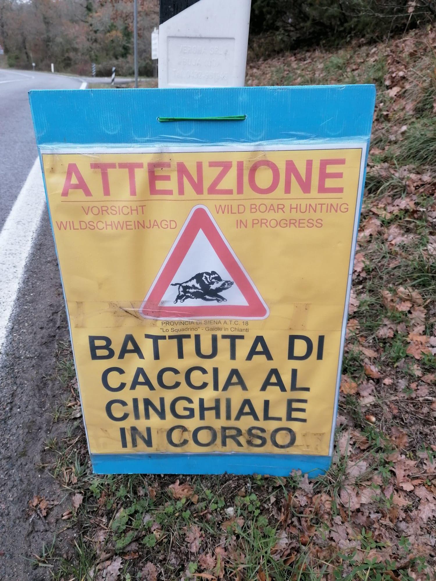 everzwijnen Toscane - cinghiale