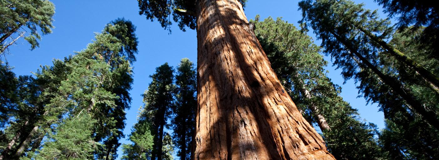 photodune-1460489-sequoya-xxl-11