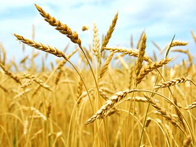 agricultural-consulting-seed-farm-alberta-bc-saskatchewan