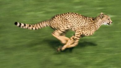 Photo of Wild Speed- Fast Five Mammals On Earth