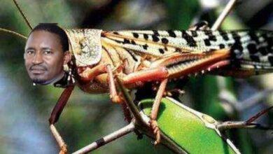 Photo of Internet Dedicates The Best Memes After CS Kiunjuri Asked Kenyans To Sent Locust Photos