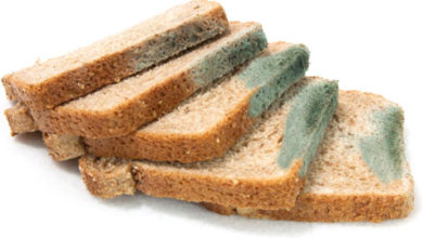 Photo of This Is What Happens If You Eat Bread With Mold