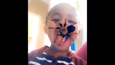 Photo of 10 Hilarious Videos Capturing Best Kids Being Knocked Off Camera By Spider Effect