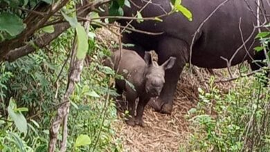 Photo of Check Out Cute Photos Of Baby White Rhino Born In Meru