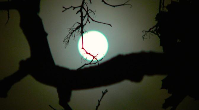Fair Haven Super Moon Gazing