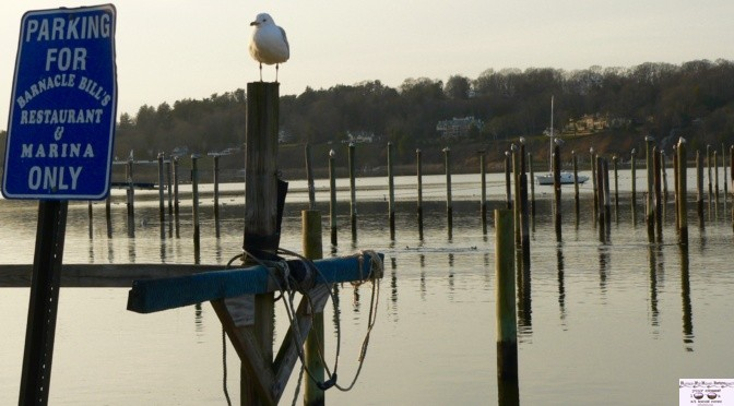 Focus: Barnacle's and the Gulls