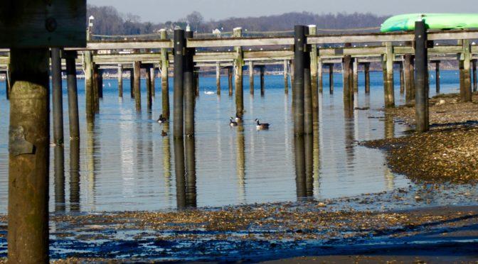 Reflection: A Ducky Spring