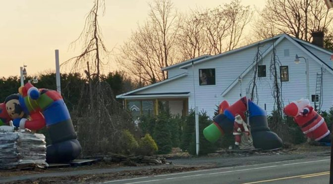 Scene Around: Looking A lot Like a Wild Christmas Time