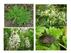 Resourcefulness in Rural China – Herbs