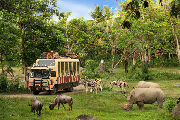 Take the Safari bus around the park for a world class zoo experience