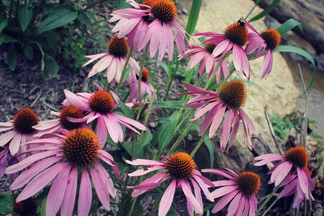 Cincinnati Nature Center Flowers