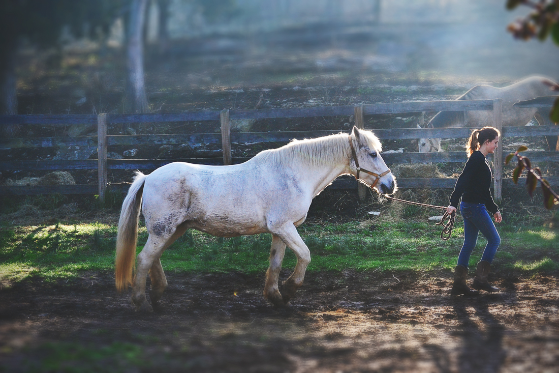 Jenny leading a horse