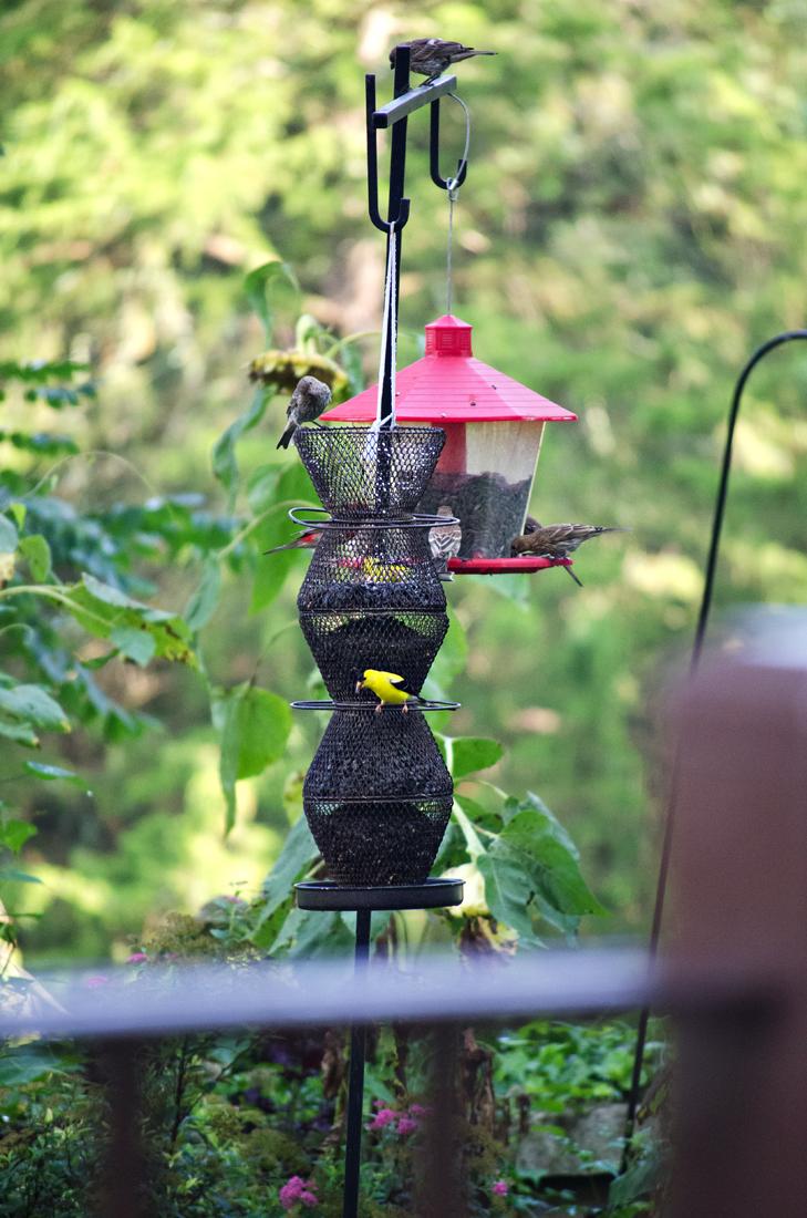 Bird feeders in the silent garden
