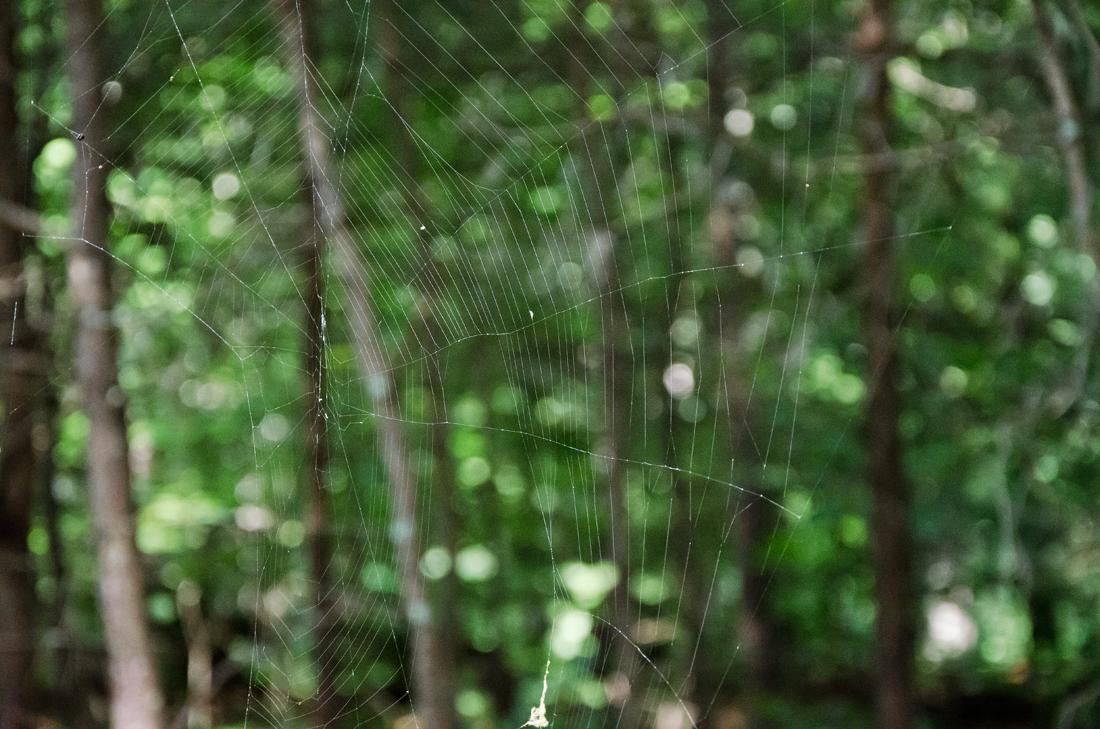 Spider haven