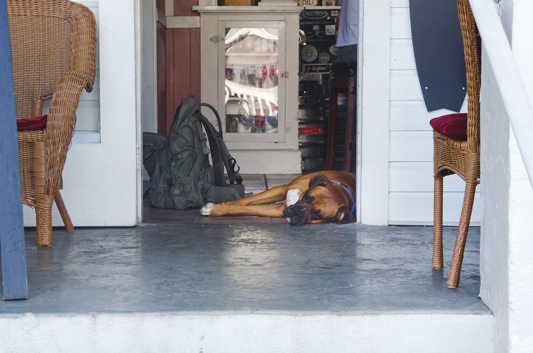 dog-life-on-key-west