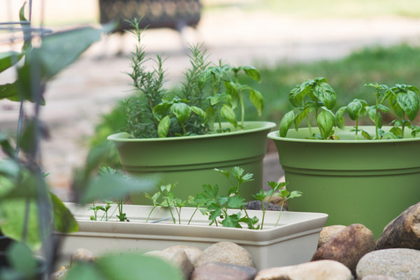 Container Gardening + Plant Collecting