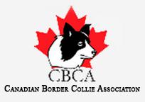canadienBorderCollieAssociation