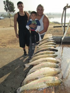 SARL fish report 10-30-13