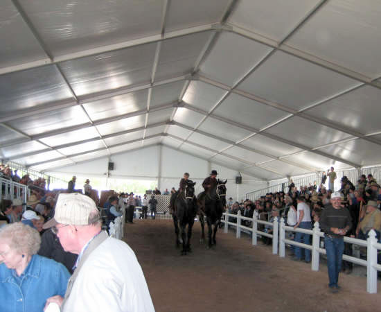 Picture of a horse auction held under one of our clearspan event tents.