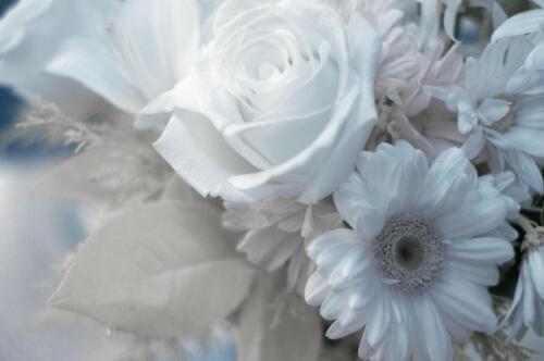 infared flowers