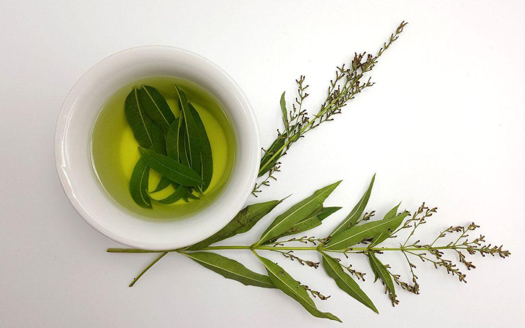 Lemon Verbena Tea: The Forgotten Wonder Leaves