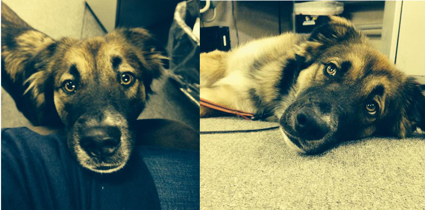 Office Dogs Combined 4