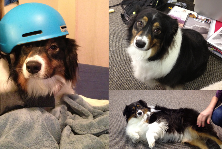 Office Dogs Combined 5