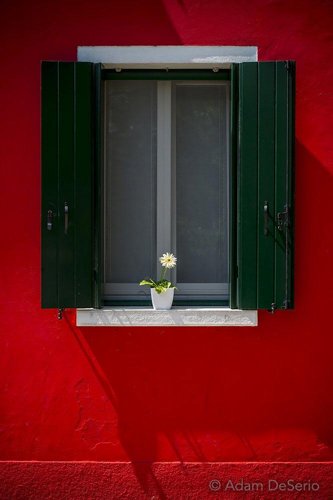 Burano Window Flower