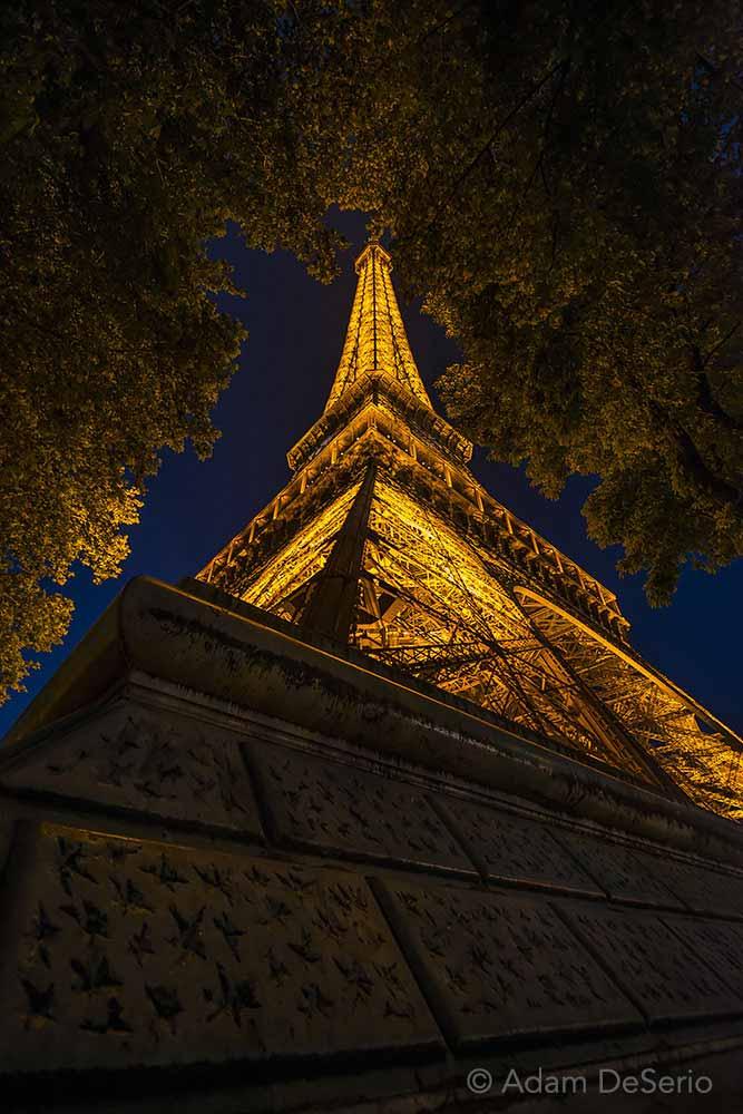 Eiffel Tower Tree, Paris