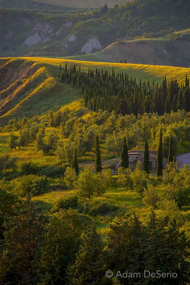 Field Of Cypress, Tuscany