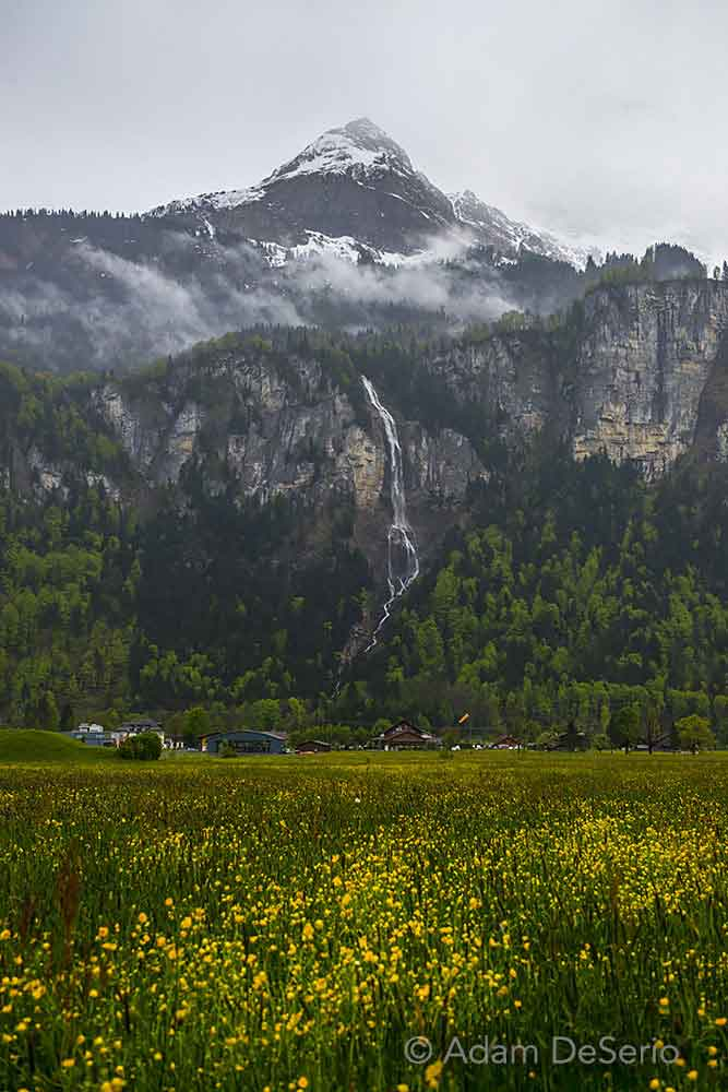 Swiss Alps Flowers and Falls