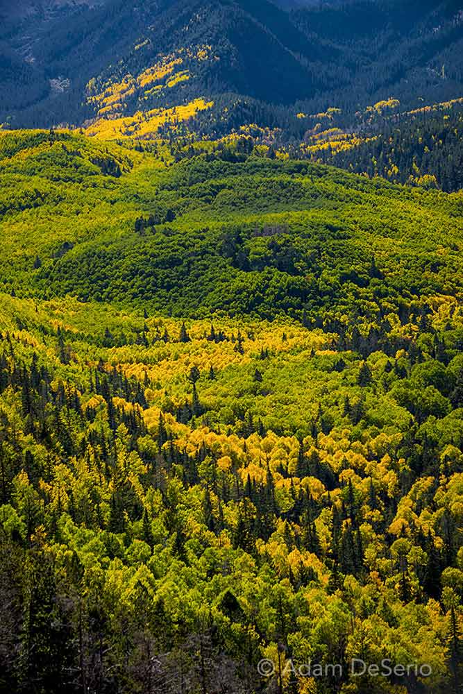 Locket Meadow Colors, Flagstaff, Arizona