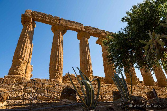 Agrigento Greek Columns