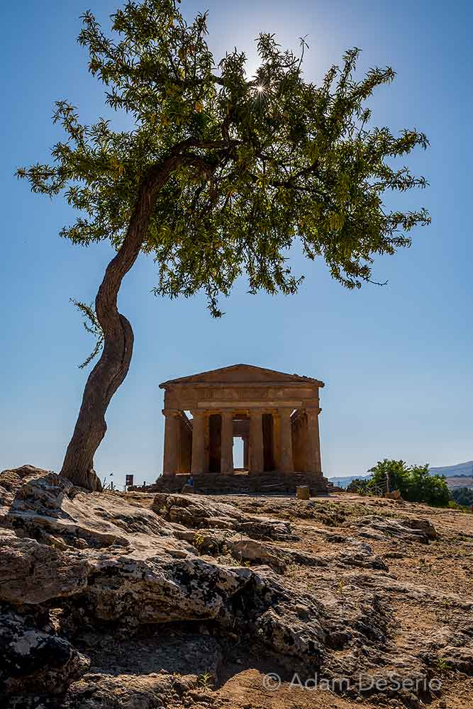 Agrigento Temple and Tree