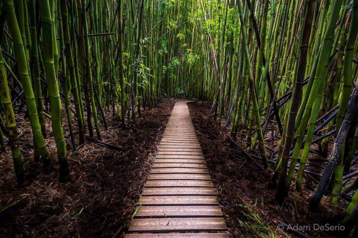Hana Bamboo Forest