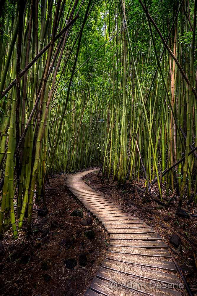 Hana Bamboo Forest Path
